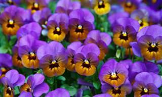 10 פרחים וצמחים שמתאימים לגידול בסתיו