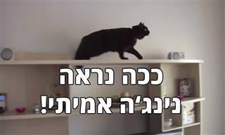 החתול המוכשר הזה יוצא למשימה בלתי אפשרית!