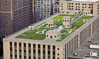 טיול מדהים על גגות ניו יורק