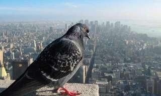 תמונות מדהימות ממעוף הציפור