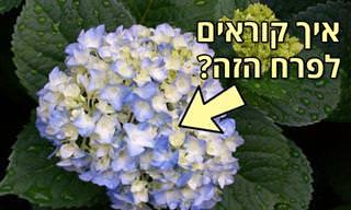 האם תוכלו לזהות את שמות הפרחים הבאים?