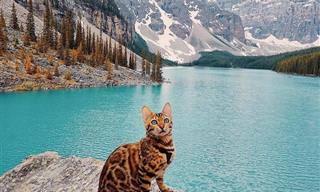 תמונות מדהימות של סוקי - החתולה שאוהבת לטייל בעולם