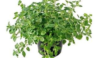 3 צמחי תבלין ביתיים - פשוט, בריא וטעים