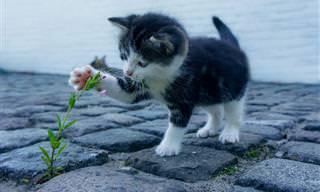 14 חיות חמודות להפליא שיגרמו לכם לחייך