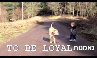 דברים שכלבים יכולים ללמד אותנו