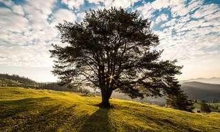 עדותו של עץ - סיפור מדורות שעברו