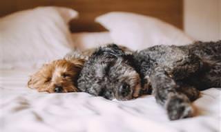 7 סיבות לכך שלא כדאי לישון עם חיית המחמד במיטה