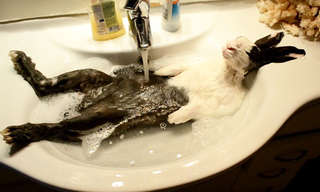 בעלי חיים מתוקים באמבטיה שיעלו לכם חיוך