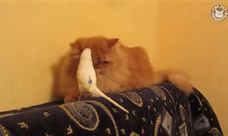 לקט סרטונים עם בעלי כנף מצחיקים, משעשעים ומרושעים