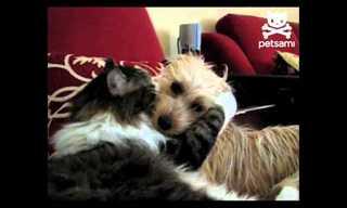 חתול וכלב בסצינה רומנטית - משעשע!
