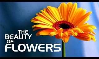 כמה פלא יש בפרח - סרטון מדהים!
