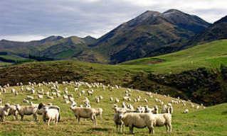 אלבום הכבש השישה-עשר להאזנה ישירה