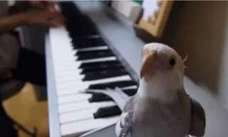 התוכי בשיר שלא ייצא לכם מהראש