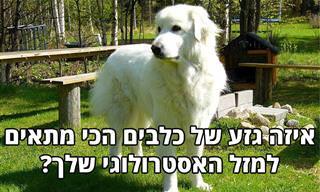 איזה גזע של כלבים הכי מתאים למזל האסטרולוגי שלך?