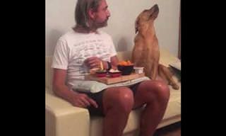 הכלב המצחיק הזה ממש רוצה אוכל, אבל לא מוכן להודות בזה...