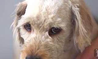 המהפך המדהים של צ'רלי הכלב