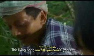 גשר העץ של מגהאליה