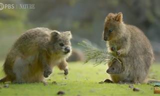 10 רגעים נדירים בטבע שנתפסו לראשונה בעדשת המצלמה