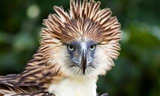 12 חיות מדהימות ומפתיעות שעדיין לא הכרתם!