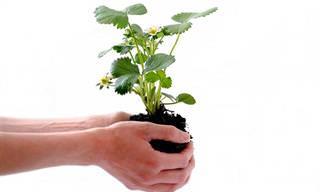 15 צמחים שיטהרו את אוויר הבית שלכם
