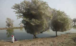 פקיסטן מציגה: כיבוש העכביש