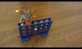 אלה כנראה העכברים החכמים בעולם!