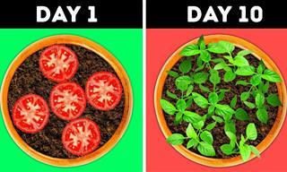 23 טיפים גאוניים לגינה שלכם