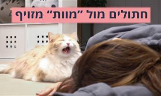"""איך חתולים מגיבים כשהבעלים שלהם """"מתים""""?"""