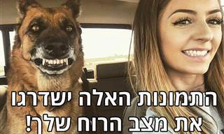 16 תמונות מצחיקות ומחממות לב של כלבים וחתולים