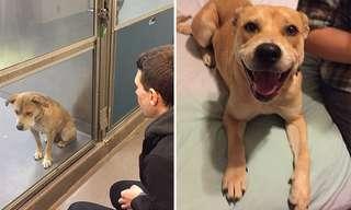 כלבים וחתולים לפני ואחרי אימוץ - מהפך מדהים!
