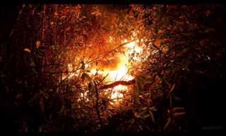 צפו מקרוב בהתפרצות הר הגעש קילוואה בהוואי
