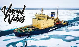 סרטון טבע מדהים של האזור הארקטי
