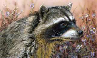 ציורים מדהימים של בעלי חיים!