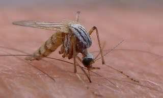5 תרופות ביתיות יעילות לעקיצות יתושים