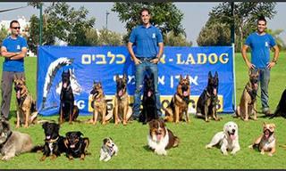 עצות כלליות לאימון כלבים שיעזרו לכם להשיג תוצאות במהירות