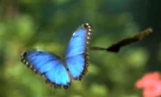 רגע של נחת - פרפרים בהילוך איטי