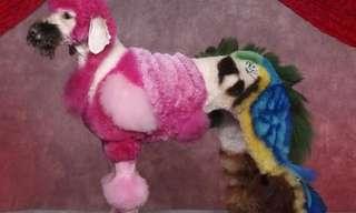 תספורות מיוחדות של כלבים