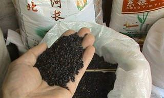 מהם ההבדלים בין סוגי האורז השונים וכיצד יש לבשלם?