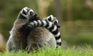 17 שיעורים בהורות וזוגיות מבעלי חיים