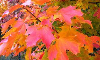 תמונות של עצים בשלל צבעים וגדלים!