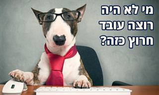 בדיחה: כלב בראיון עבודה