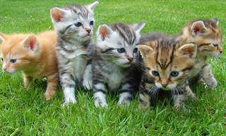 45 דברים שלא ידעתם על חתולים