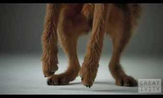 פרסומת יצירתית ומרגשת לאוכל לכלבים- מדהים!!