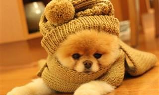 בעלי החיים החמודים האלה כבר מוכנים לימי החורף הקרים!