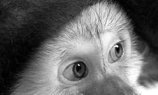 תמונות חיות בשחור ולבן