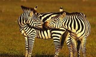 חיות מתנשקות - תמונות מלאות באהבה!