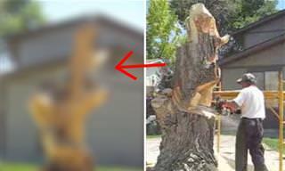 פיסול מדהים בגזע עץ בעזרת מסור חשמלי