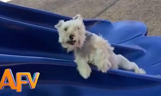 כלבים מגושמים - סרטון חמוד ומצחיק שיעשה לך את היום!