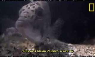 מלחמת ההישרדות של דגי אפריקה