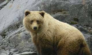 מה בני האדם יכולים ללמוד על חינוך מהדובים?